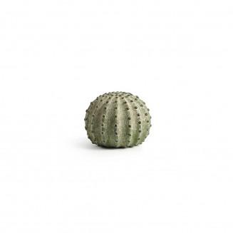 Boule de cactus vert 13,5cm...